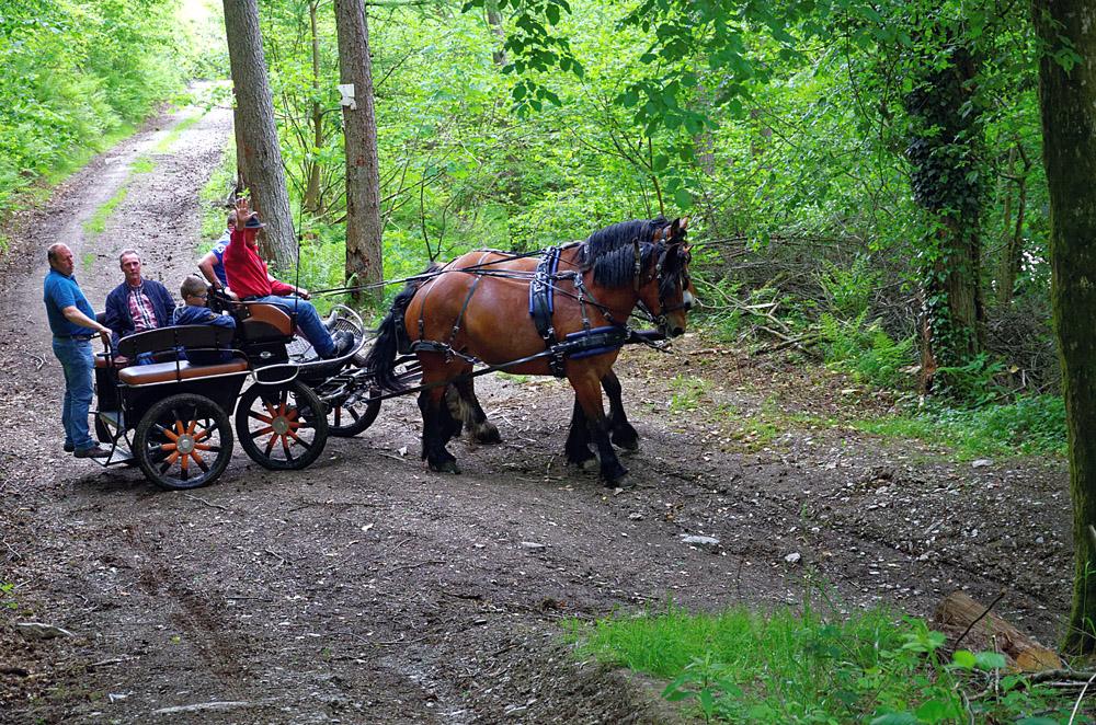 Descente vers la Semois par les chemins forestiers